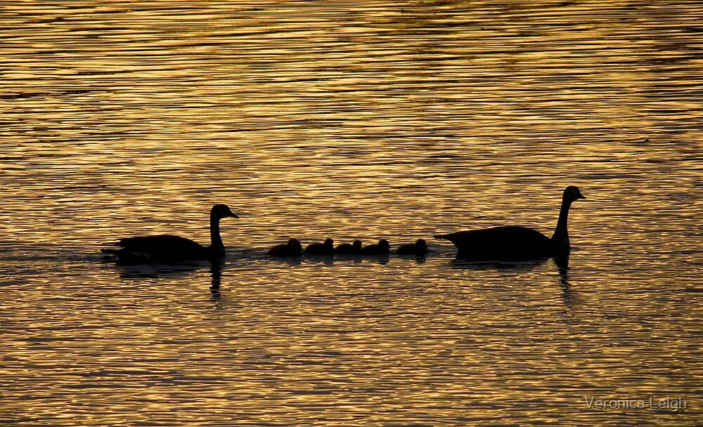 Silhouette on the River by Veronica Schultz