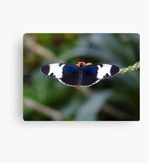 Sapho Longwing #1. Canvas Print
