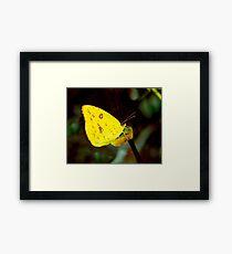 Sulphur. Framed Print
