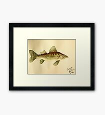 Walleye Framed Print