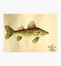 Walleye Photographic Print