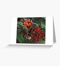 Three Tailed Tiger Swallowtail. Greeting Card