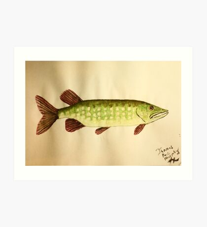 Northern Pike Art Print