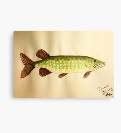 Northern Pike Metal Print