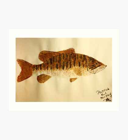 Smallmouth Bass Art Print