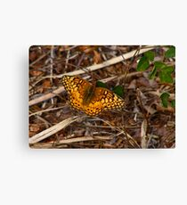 Varigated Fritillary. Canvas Print