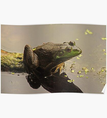Frog 8376 Poster