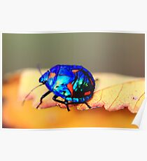 stink beetle Poster