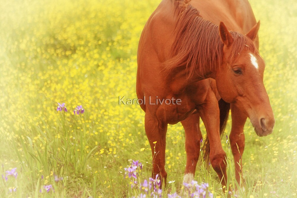 Wild as the Flowers by Karol Livote