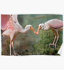 Roseate Spoonbill Siblings in the Nest Poster