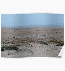 Misty morning – Namibia Poster