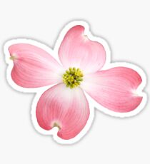 Pink Dogwood Sticker