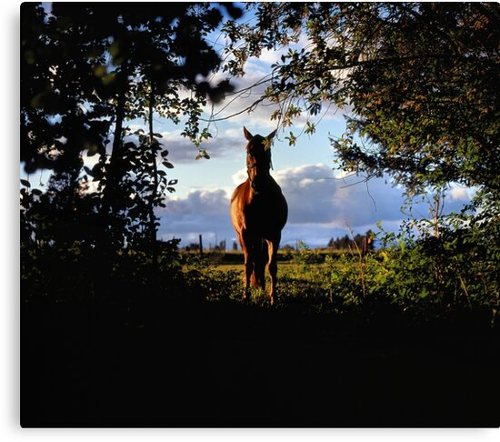 Equine, Evergreen Montana by Rodney Johnson