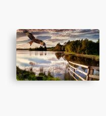 Red Kite Flying Canvas Print