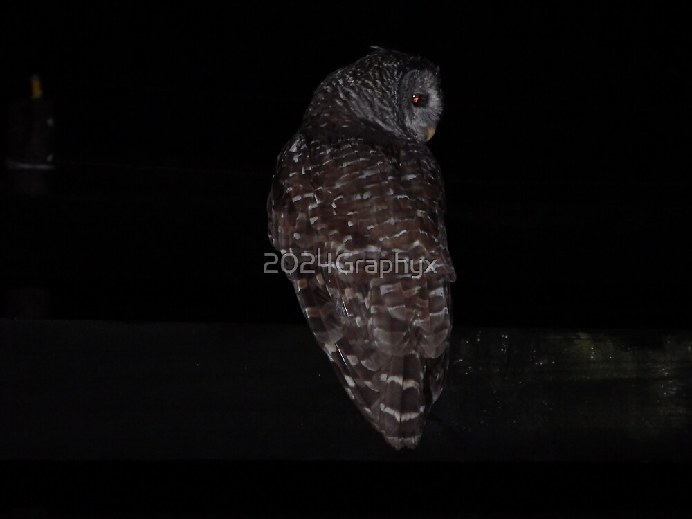 Night Owl by 2024Graphyx