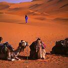 the sahara by Matt Bishop