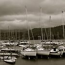 The Marina by Lou Wilson