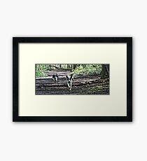 Benson chasing Jess in woods Framed Print