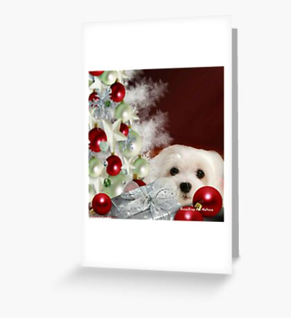 Snowdrop the Maltese at Christmas Greeting Card