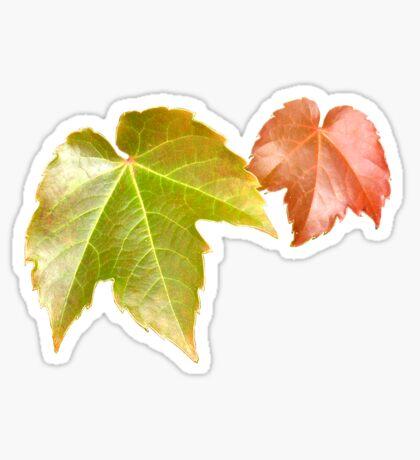 Splitting Season Sticker