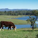 It's a cow's life. by Robyn Selem