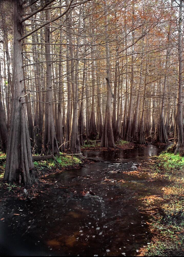 Cypress Swamp. Jane Green Creek #5. by chris kusik