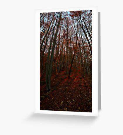 Beechwood sunset Greeting Card