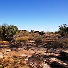 The magic of Arnhem Land - Near the cave entrance by georgieboy98
