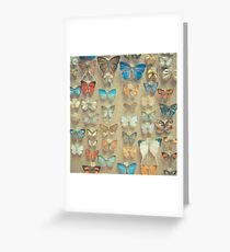 The Butterfly Collection II Greeting Card
