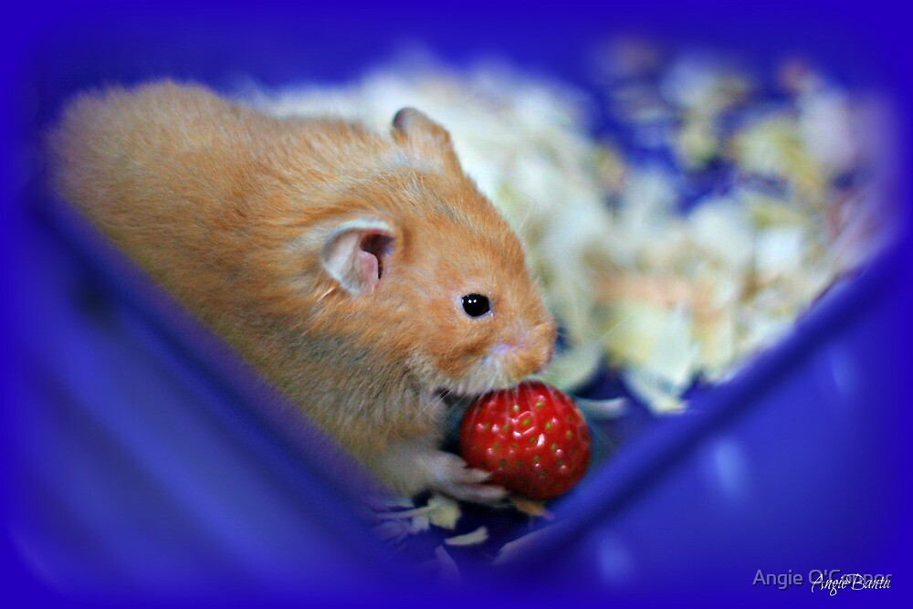 Twinkie eating a strawberry by Angie O'Connor