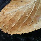 Gold leaf with raindrops by armadillozenith