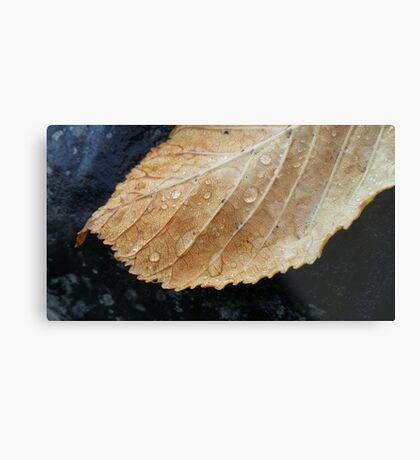 Gold leaf with raindrops Metal Print