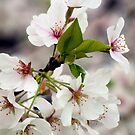 Scent of Spring by Jane Brack