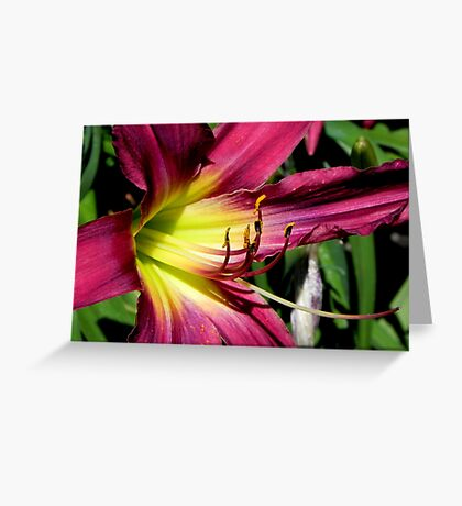 Oh Lily © Greeting Card