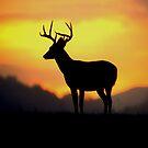 Sunrise Buck by Miles Moody