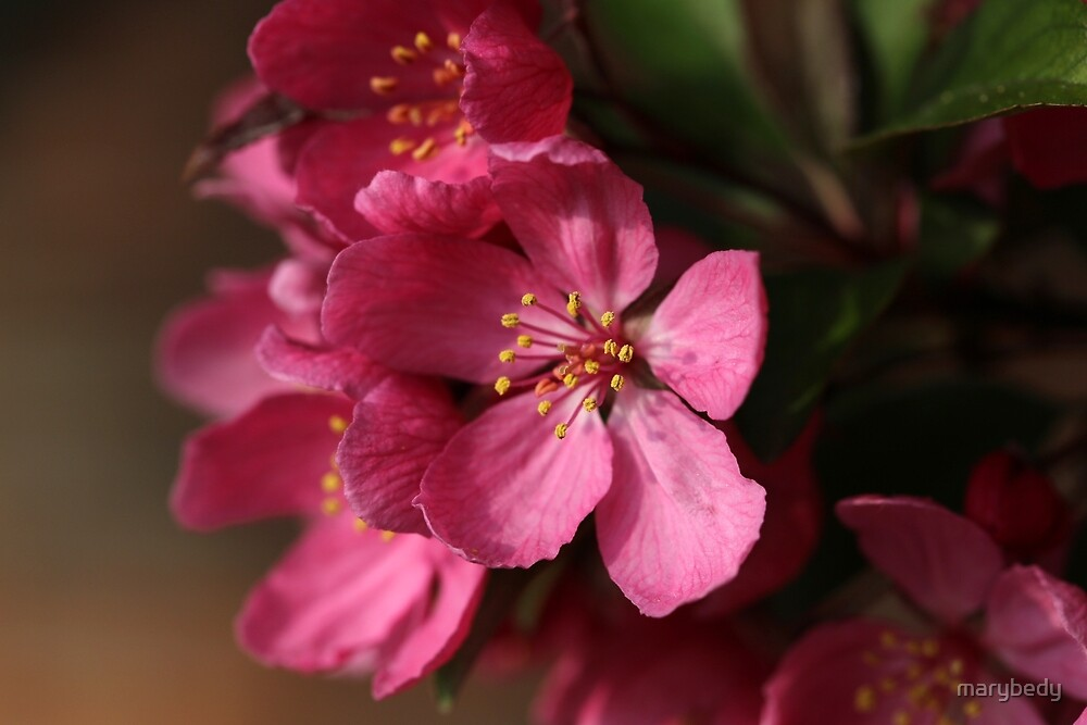 Spring Pink by marybedy