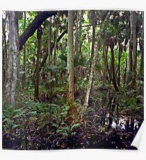 Swamp. Highlands Hammock. Poster