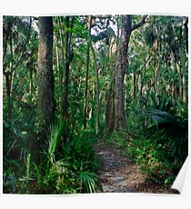 Path Through The Oaks. Highlands Hammock. Poster