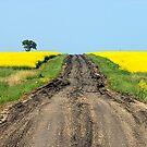 A Muddy Farm Road and A Lone Tree by Stephen Thomas