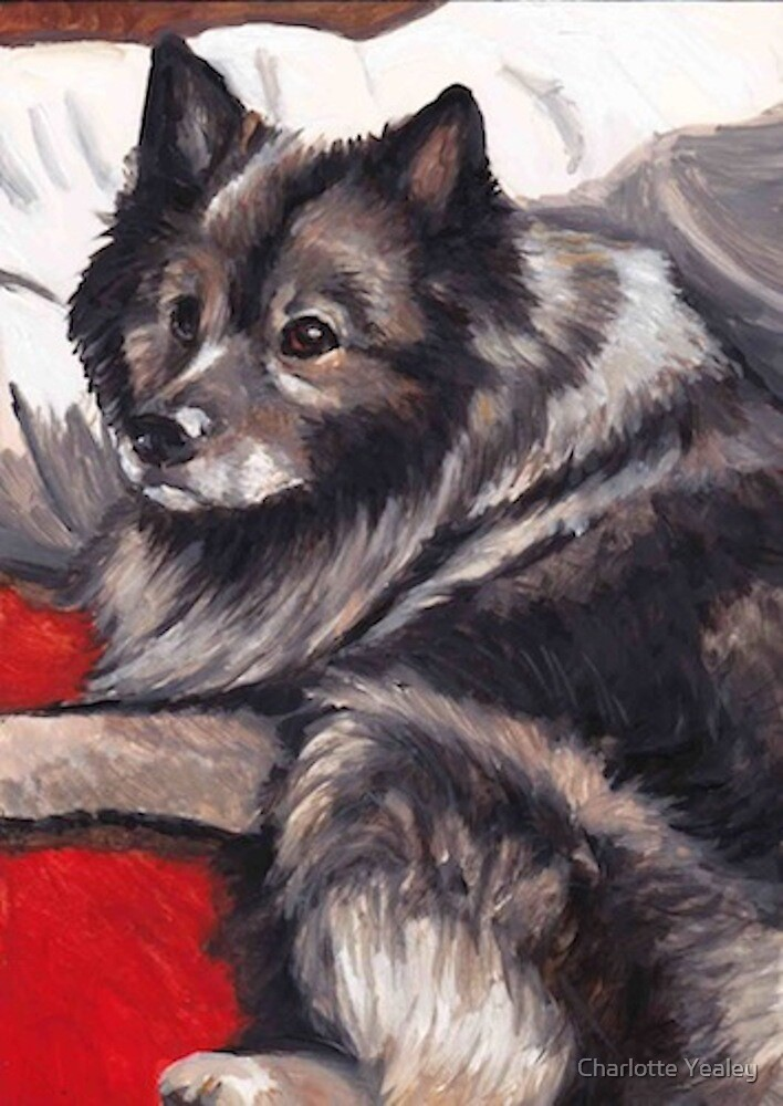 Noodles the Keeshond by Charlotte Yealey