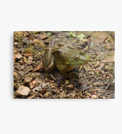 Frog January Metal Print