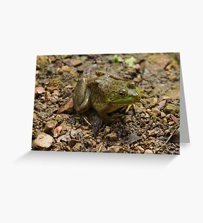 Frog January Greeting Card