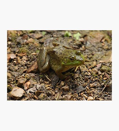 Frog January Photographic Print
