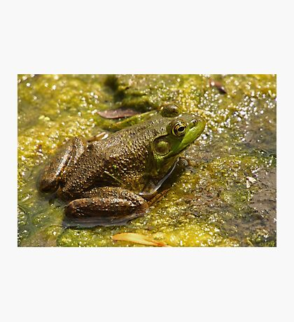 Frog March Photographic Print