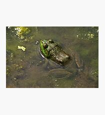 Frog April Photographic Print
