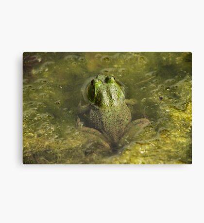 Frog May Canvas Print