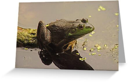 Frog June by Thomas Murphy