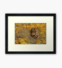 Frog July Framed Print