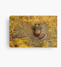 Frog July Metal Print
