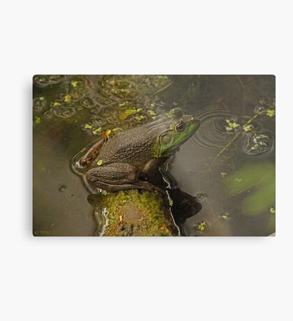 Frog September Metal Print